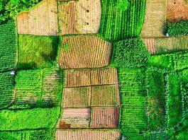 Lavorare la terra in maniera circolare, il report della Fondazione Ellen MacArthur