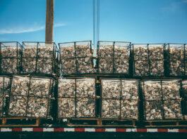 """Il progetto per riportare le ostriche nella baia di New York. """"Fondamentali per il ripristino ambientale"""""""
